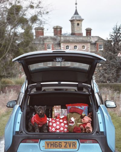 Heading home for Christmas loaded up with presents and man's best friend. Nothing quite like Christmas and the smiles that greet you when you get there 12daysofeyeem Dog Car Journey Travel Country Outdoors No People Winter
