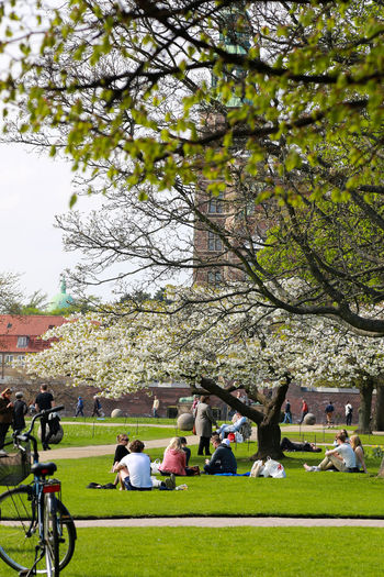 Kongenshave Parks Adult Branch Cherry Blossom Crowd Day Grass Group Of People Growth Kongens Have Large Group Of People Leisure Activity Men Nature Outdoors Park Park - Man Made Space Plant Real People Relaxation Spring Springtime Togetherness Tree
