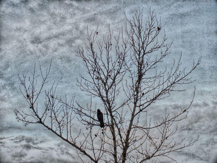 Darkeness Crow Ominous Ominous Sky Ominous Beauty