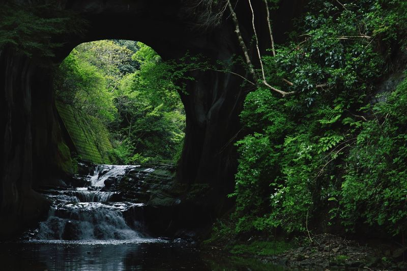 River flowing through tunnel in forest