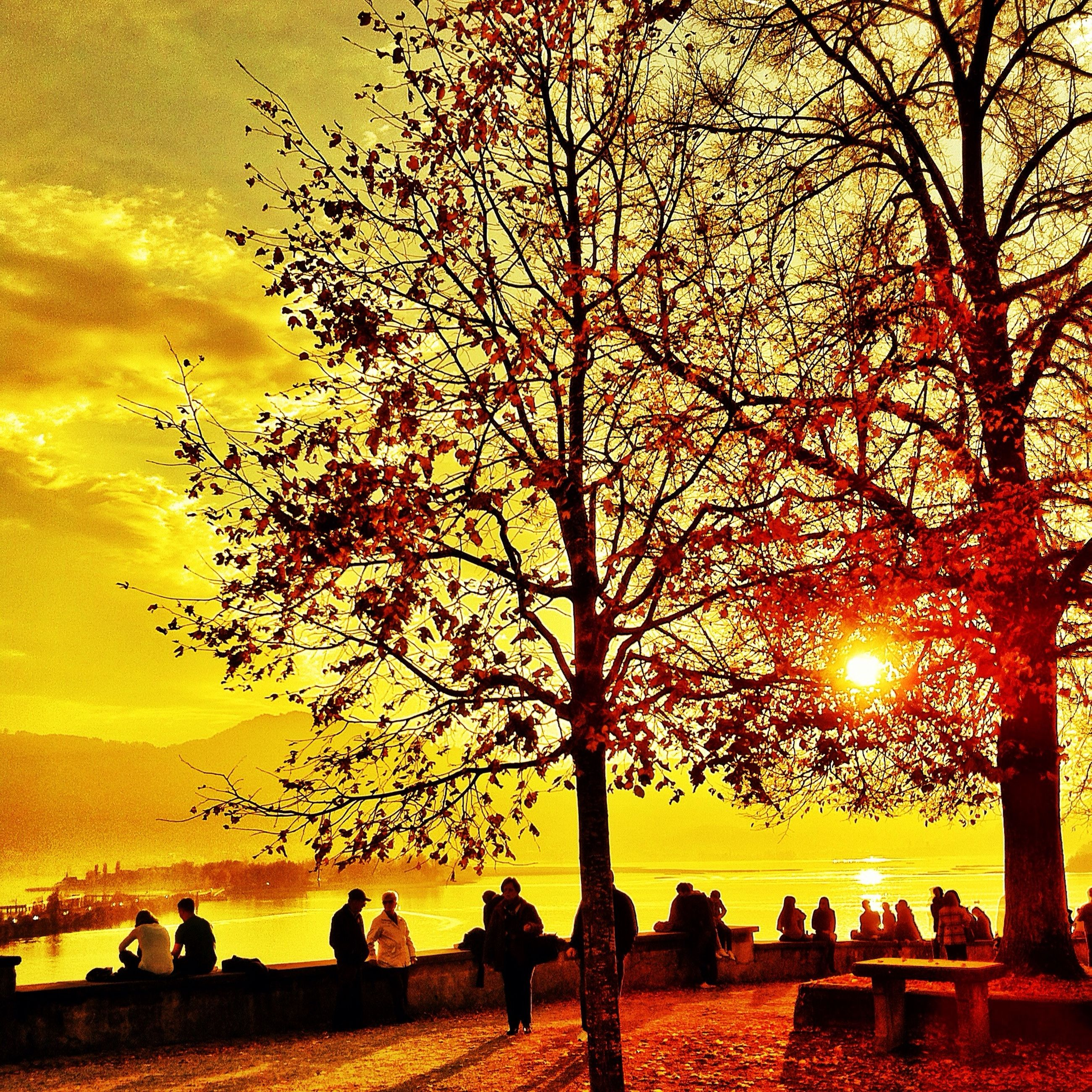 tree, sunset, silhouette, bare tree, branch, sky, beauty in nature, scenics, tranquility, nature, tranquil scene, orange color, tree trunk, person, lifestyles, leisure activity, men, park - man made space, idyllic