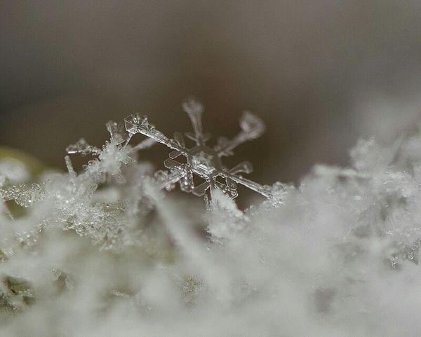Showcase: November Macro Daybugphotos.com Snowflake