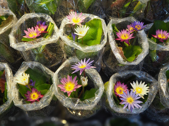 High Angle View Of Lotus Flowers In Market Stall