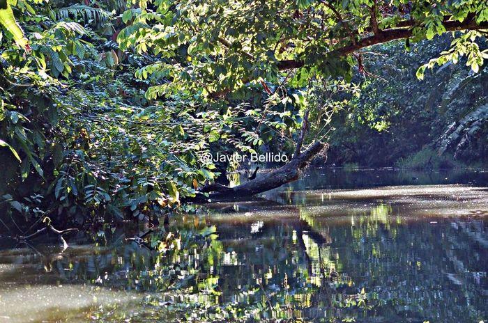 Tortugero tiene unos canales por la jungla navegables donde puedes fotografíar la flora y fauna Travelling Travel Photography Viaje A Costa Rica Fotografia De Viaje