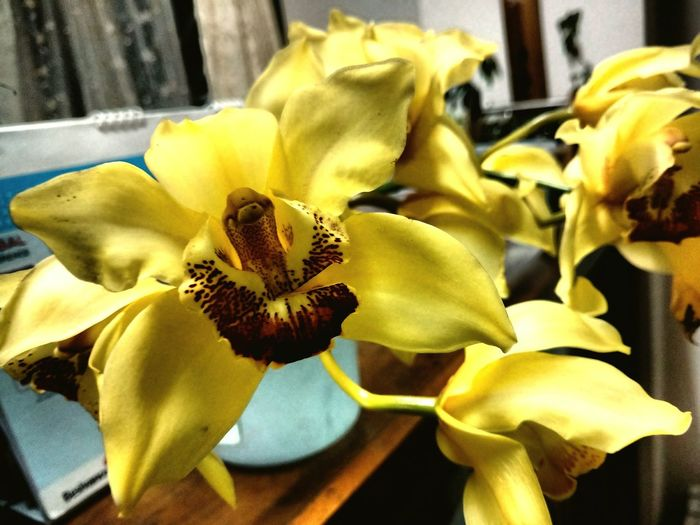 Orchids Yellow Brown HomeBlooms Beauty Natural Lovely Flower  Lastforever
