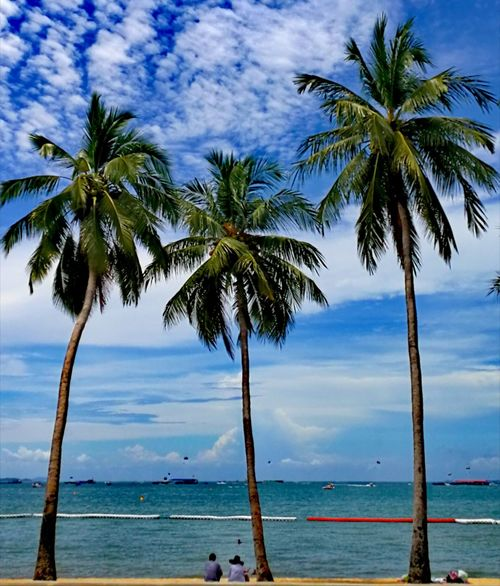 Connected By Travel Palm Tree Beach Sea Water Beauty In Nature Nature Sky Testing Huawei P10 2017 Trending Now Best Shots EyeEm Eye4photography  Day Thailand TESTING HUAWEI 2017 Beauty Magazine Shoot Lost In The Landscape VPS2017 Huawei Instagram Uniqueness Inspiring_photography_admired 2017 Collection EyeEmNewHere Second Acts Perspectives On Nature Postcode Postcards Rethink Things