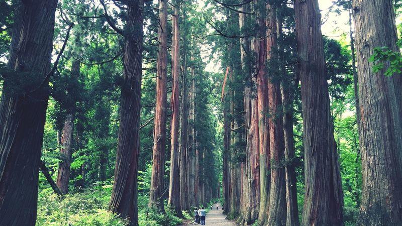 戸隠 杉並木 戸隠 杉並木