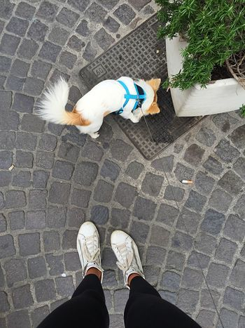 Walking with chi-hua-hua Person Personal Perspective Shoe Standing Lifestyles One Animal Leisure Activity Footwear Footpath Sidewalk Human Foot Day Paving Stone Casual Clothing Outdoors Walk Cihuahua Dog Animals Nice