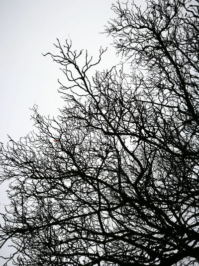 Silhouette Blackandwhite Black & White Tree Branches And Sky Branches No Leaves Winter Autumn