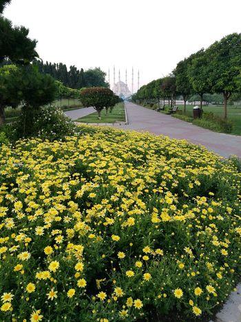 Flower Longroad Nature Yellow Nopeople Centurypark AdanaTurkey Firt EyeEm Photo Eyemphotography Eyeemphotography Colors Of Nature