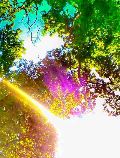 The Impurist Sunbeam Treetasticthursday Creative Light And Shadow Color Photography Eye Am Nature