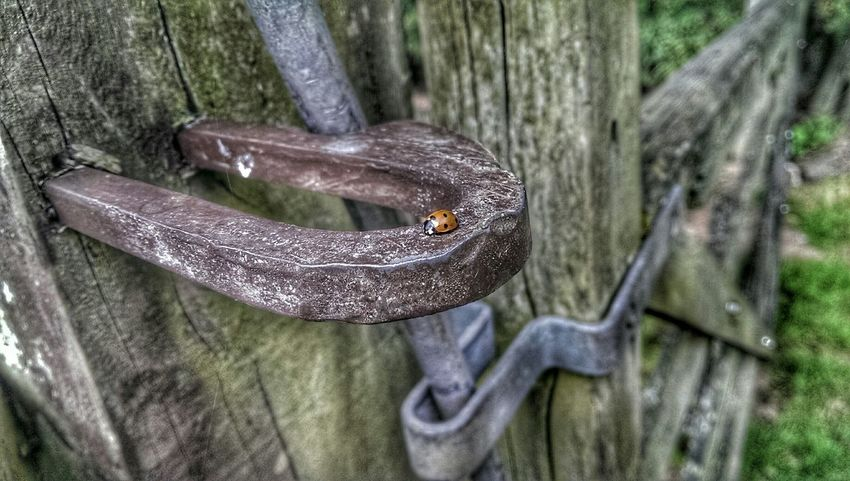 Astley At The Gate Nature On Your Doorstep Ladybug Ladybird Bugs Life Connected With Nature