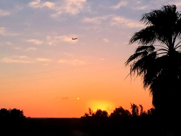 Calabria Sunset Silhouette Flying Tree Sky Nature Beauty In Nature Outdoors Palm Tree