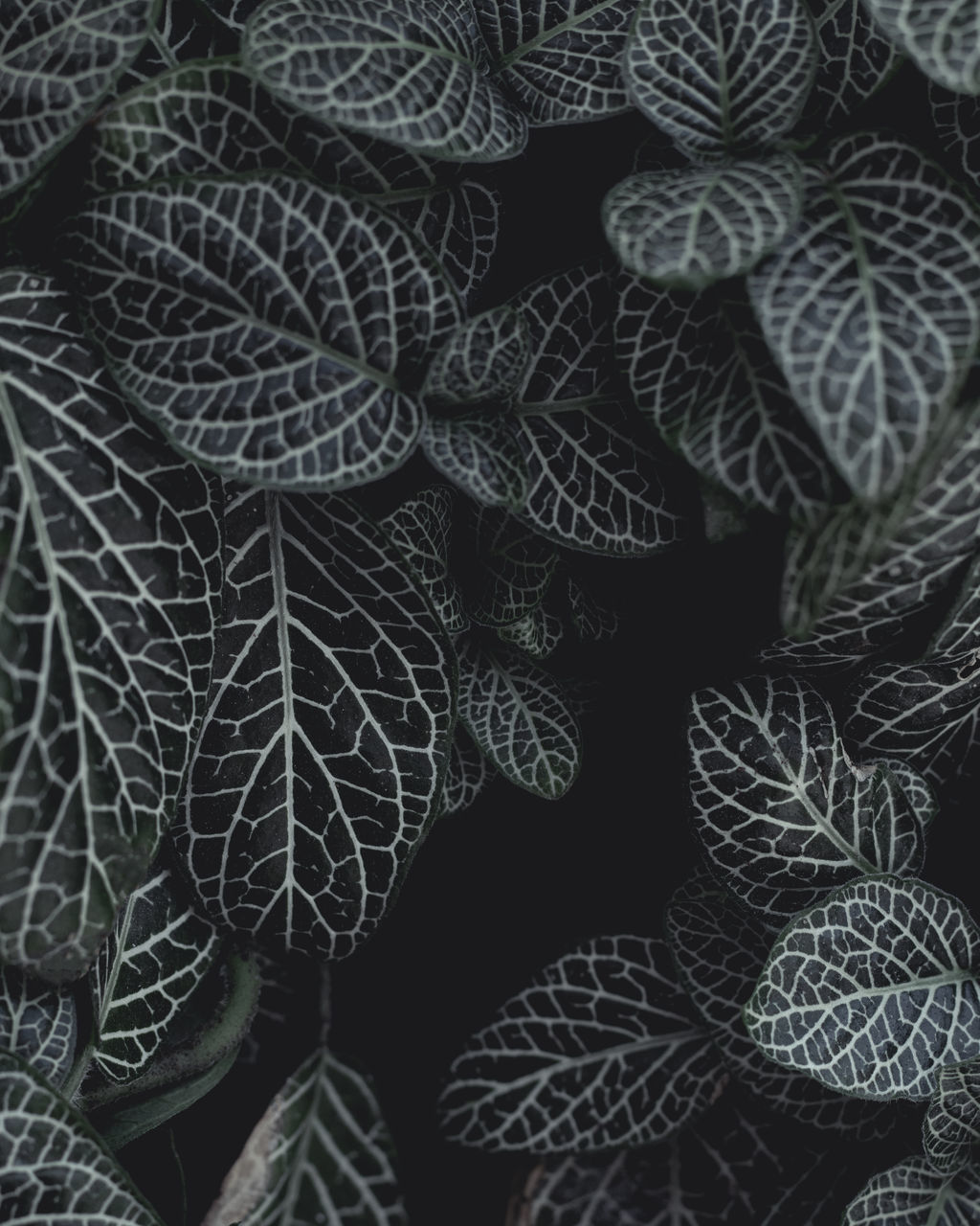 full frame, backgrounds, pattern, leaf, close-up, plant part, no people, indoors, plant, still life, art and craft, growth, textile, natural pattern, complexity, nature, textured, beauty in nature, creativity, leaf vein, leaves