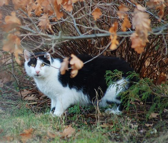 cute cat in nature Cute Cuteanimals Sweetanimal Nature Nature Photography Colour Sunnyday Nopeople Beautiful Outdoor Photography Outside Outdoor Beauty In Nature Grass Cat Sweet Cute Pets Cutecats Sweetcat Lovely Lovelycat Beautifulcat No People