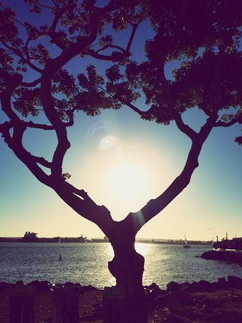 Sun and Silhouette (San Diego April 2017) Tree Silhouette Lake Sky Outdoors Water Nature Tranquility Landscape Horizon Over Water Scenics Sun Low In The Sky San Diego San Diego Bay Summer Blue Sky Summer Feelings  California Love Sommergefühle EyeEm Selects