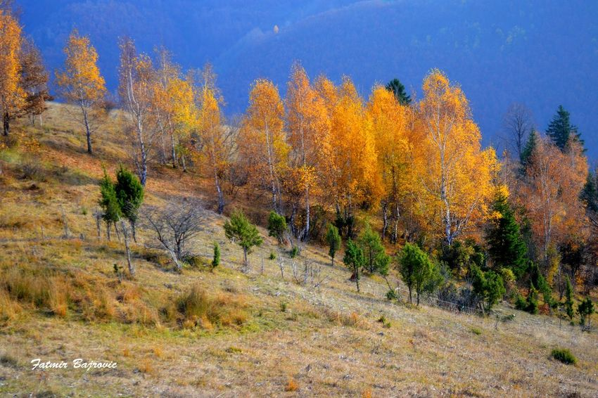 Autumn colors Autumn Beauty In Nature Blue Change Clear Sky Field Forest Growth Idyllic Landscape Nature No People Non-urban Scene Orange Color Outdoors Scenics Season  Tranquil Scene Tranquility Tree