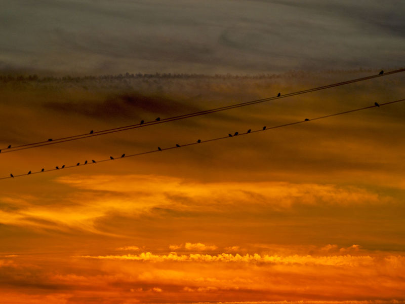 Cloudscape Love Red Passion Romantic Sunset Silhouettes Sunset_collection Beauty In Nature Bird Cloud - Sky Clouds And Sky Dehesa Dusk Energy Environment Flock Of Birds Idyllic Landscape Nature Orange Color Passion Red Sky Scenics Silhouette Sky Sunset