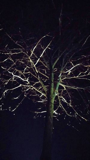 Night Bare Tree Tree Branch No People Tree Trunk Illuminated Nature Black Background Outdoors Beauty In Nature Scenics Close-up Freshness