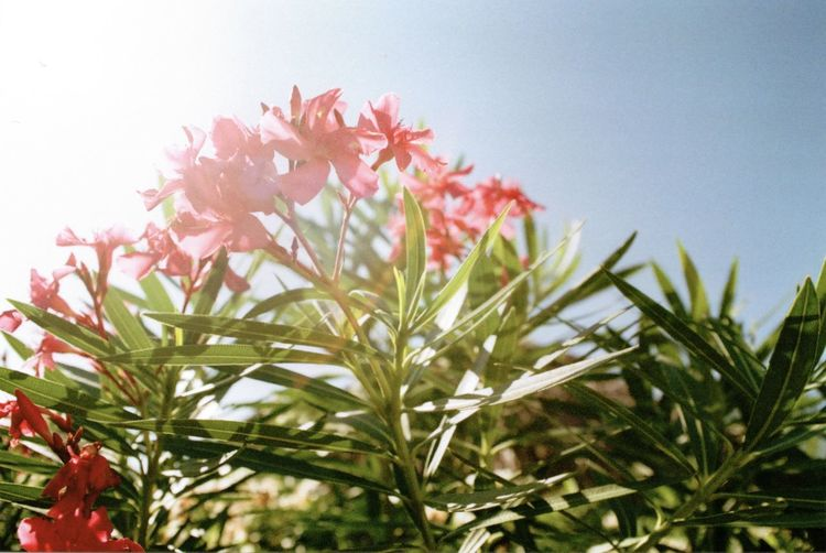 35mm Film Beauty In Nature Close-up Day Film Film Photography Flower Fragility Freshness Growth Low Angle View Minolta Minolta Maxxum Nature No People Outdoors Plant Sky