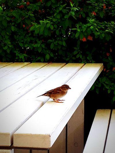 Perching Bird Animal Themes