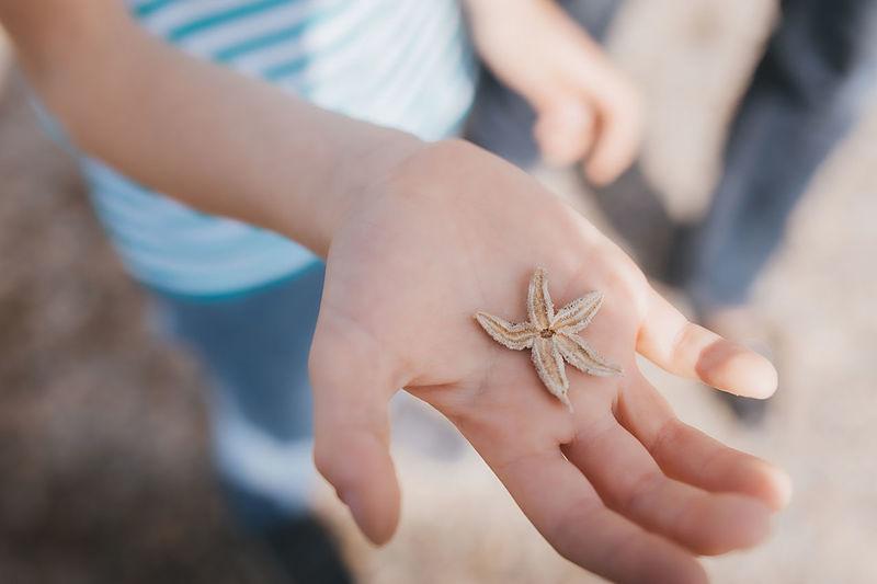 Tiny starfish in fair skin hand