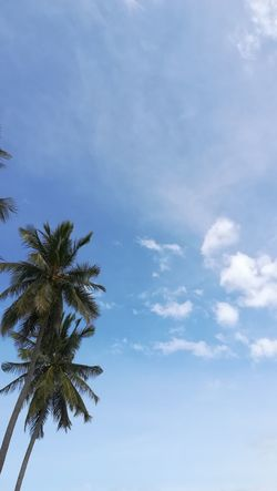 ...palms The Purist (no Edit, No Filter) Vacations Holidays Plant Palm Clouds Palm Tree Thailand Palm Trees Nature Low Angle View Beauty In Nature Outdoors Palm Tree Scenics Cloud - Sky Tree Sky Tranquility No People Day