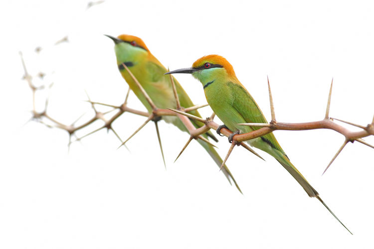 Bird Vertebrate Animal Wildlife Animal Animal Themes Animals In The Wild Perching One Animal No People Branch Nature Sky Plant Clear Sky Tree Low Angle View Day Copy Space Close-up Beak