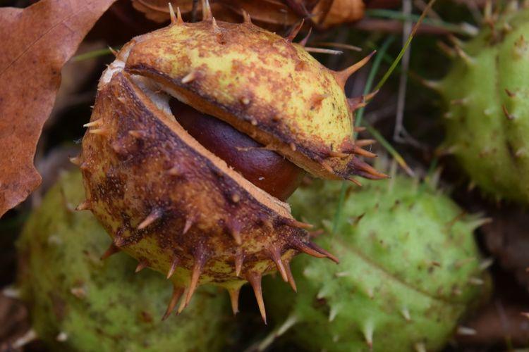 Close-up of crab on leaf