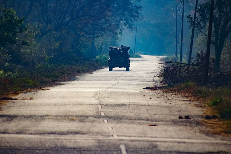 Rear view of person on road in forest