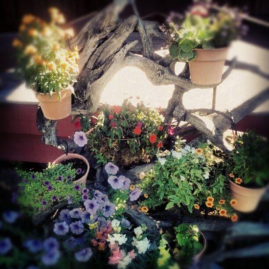 Beautifulbritishcolumbia Pemberton Flowers