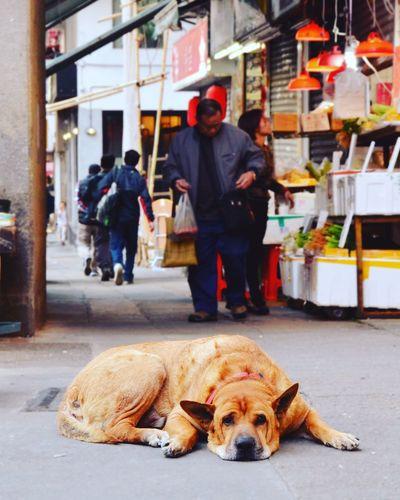 why do you look so sad? Wetmarket Hongkongwetmarket Sadeyes City Pets Full Length Men Pedestrian First Eyeem Photo