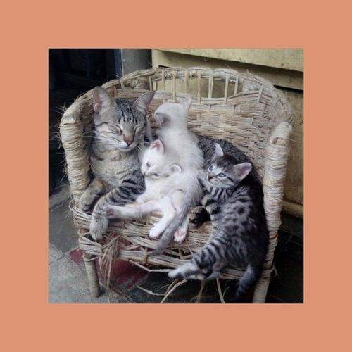 O todos en la cama (silla), o todos en el suelo. ⬆⬆⬆Ellos saben xD Cats Catslover Instapets Intacats