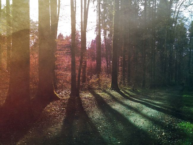 Shadows in the forest Mexturesapp Forest Landscape_Collection Tadaa Community