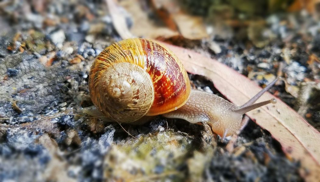 Animal Themes One Animal Nature Close-up Outdoors No People Day Beauty In Nature California LongBeachCa Snail Shells Rainy Days Animals In The Wild Animal Wildlife Gastropod