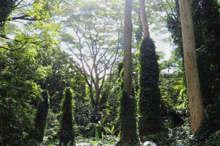 Jungle Roof Beauty In Nature Branch Day Forest Green Green Color Growth Nature No People Outdoors Scenics Sky Tranquil Scene Tranquility Tree Tree Trunk
