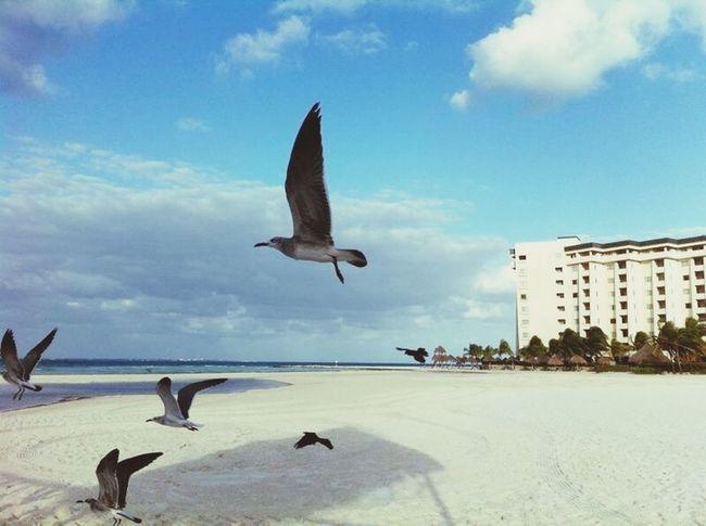 Aves Vuela Libre Mar
