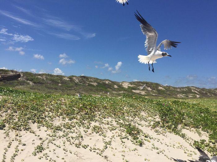 No Filter No People Bird Sky Seagull Flight Motion