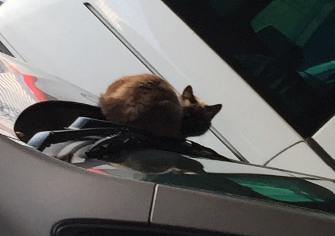 transportation, one animal, animal themes, mammal, car, domestic cat, no people, mode of transport, domestic animals, day, sitting, pets, feline, indoors, close-up