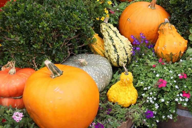 Autumn Celebration Day Field Flower Flowering Plant Food Food And Drink Freshness Gourd Halloween Healthy Eating High Angle View Holiday - Event Nature No People Orange Color Outdoors Plant Pumpkin Vegetable