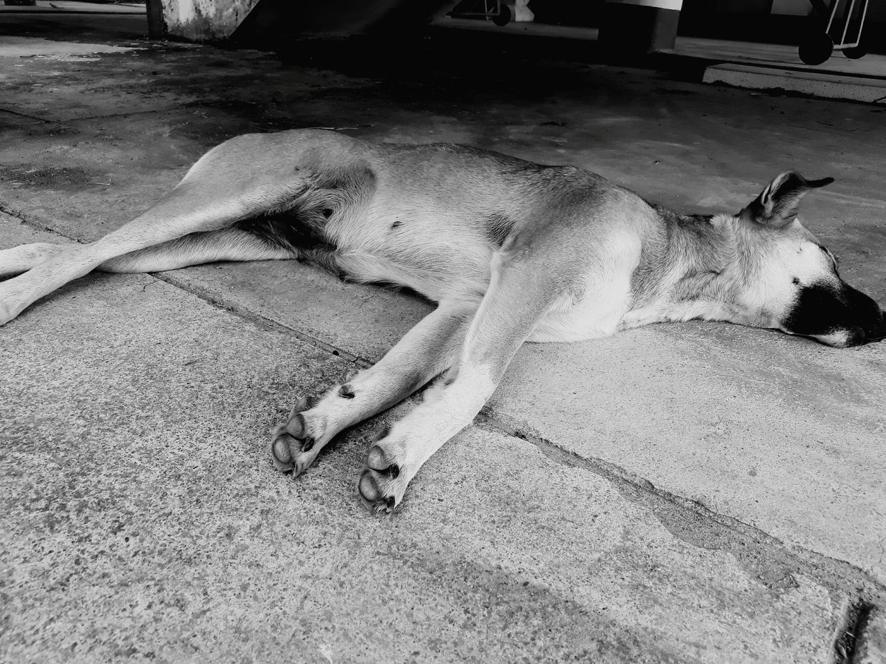animal themes, one animal, mammal, relaxation, dog, sleeping, domestic animals, lying down, pets, day, no people, outdoors, animals in the wild, nature, close-up