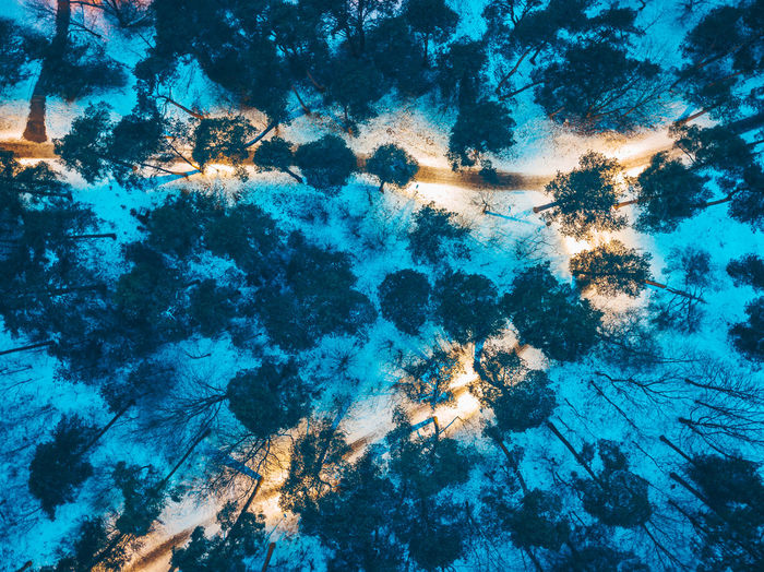 Park at night Aerial Shot Dark Drone  Drone Shot Lights Trees Backgrounds Beauty In Nature Close-up Full Frame Illuminated Luminosity Mavic Mavic Pro Nature Night No People Outdoors Park Satellite View Sea Snow Street Lights Tree