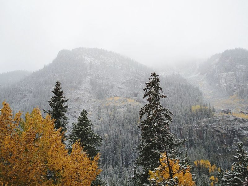 Misty First Snow Fall Colors Nikon Autumn Mountain Road Colorado Travel Tree Plant Fog Growth Cold Temperature Beauty In Nature Winter Nature No People Tranquil Scene Tranquility Snow Day Scenics - Nature Sky Land Non-urban Scene Forest Mountain Outdoors
