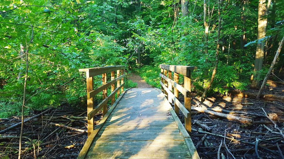little bridge in the forest :) The Way Forward Tree Long Narrow Empty Growth Plant Shadow Green Color Solitude Day Branch Tranquility Tranquil Scene Pathway Walkway Nature Footpath Outdoors Green Bridge Bridge - Man Made Structure Small Bridge Small Bridge In The Woods