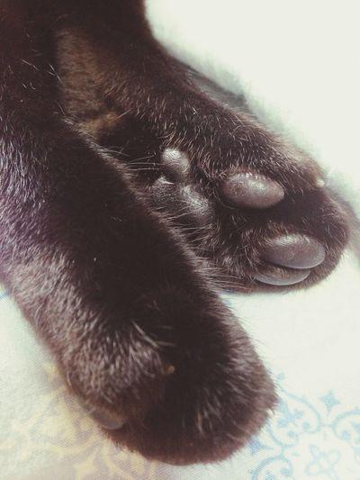 Black Cat 肉球