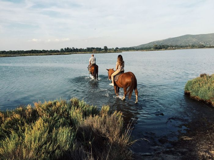Horseriding in Tuscany Nature Photography Nature Horses Horse Riding Italy Tuscany Countryside Tuscany Domestic Animals Animal Themes Mammal Domestic Pets