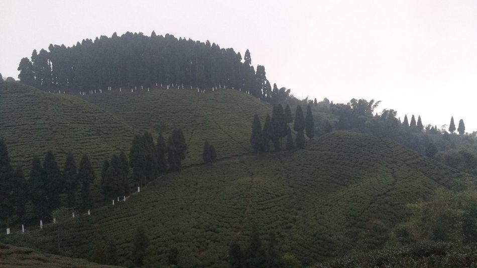 Tea garden at Mirik First Eyeem Photo