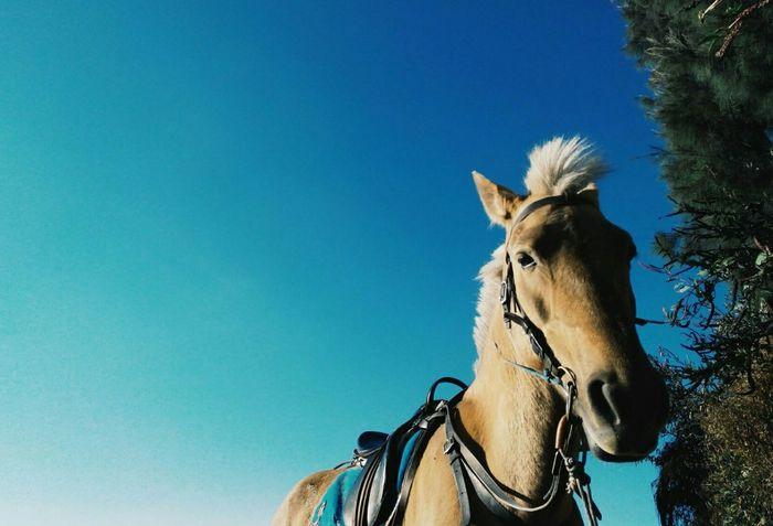 EyeEm Best Shots Horse Populerphoto Populer Photos