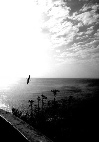 Drift #portugal #Algarve #bw #photo Fotografia Photos Blackandwhite Behindthelens LoveBW Darksky Bw_details Portugal_em_fotos Photography Olho_portugues Water Sea Beach Full Length Sport Silhouette Men Paddleboarding Sand First Eyeem Photo EyeEmNewHere