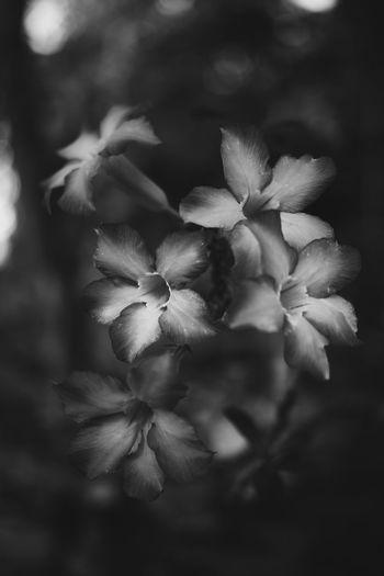 Flowers Blackandwhite EyeEmNewHere Nature Flower Head Flower Close-up Plant Sky Blooming